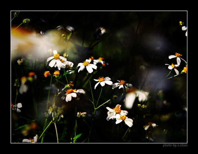 Like a dream [explored]