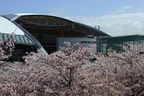 20100410 阪神競馬場 / Hanshin R.C.