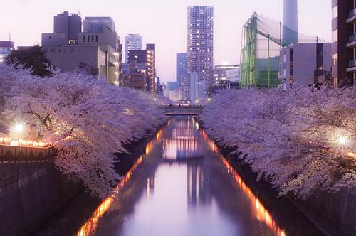 Meguro River & Cherry blossoms