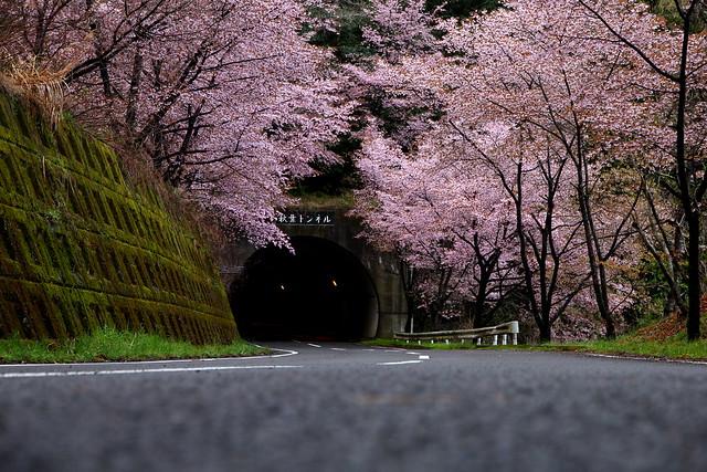 Hyotan Sakura_23