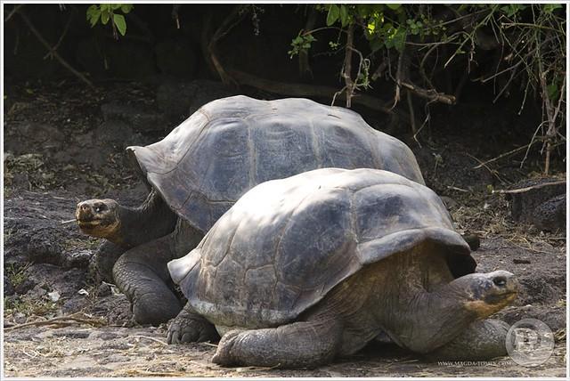 2012 03 19_Magda i Tomek Dookola Swiata_Galapagos_DSC_0333