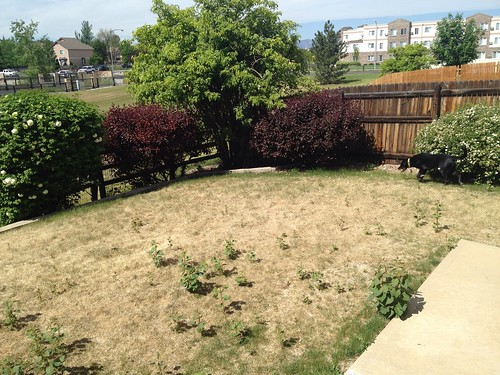 yard before.