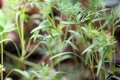 seedlings 045
