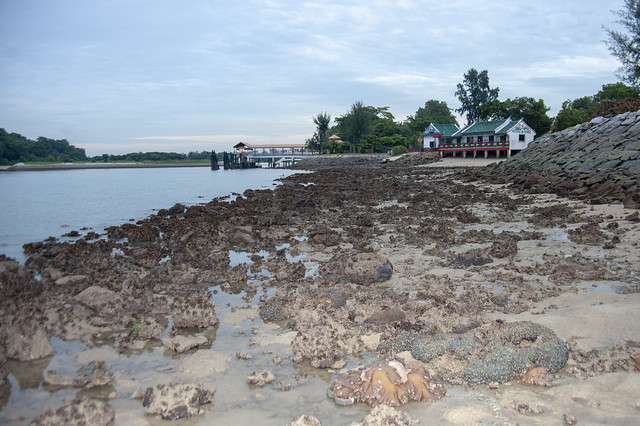 Reefs near the temple at Kusu Island