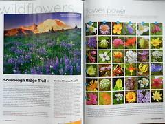 brochure(0.0), poster(0.0), brand(0.0), advertising(0.0), art(1.0), text(1.0), magazine(1.0), graphic design(1.0), design(1.0),