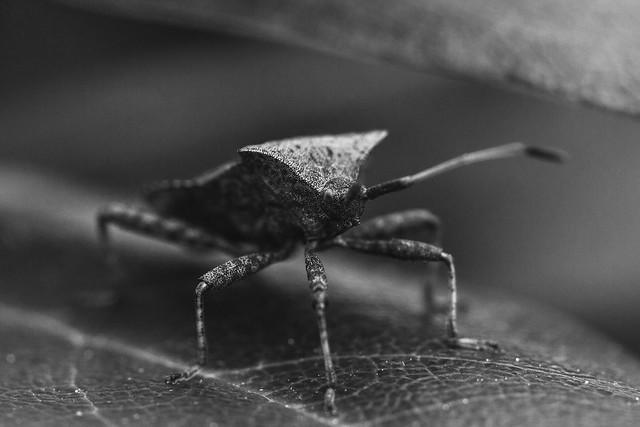 [037] Dock Bug