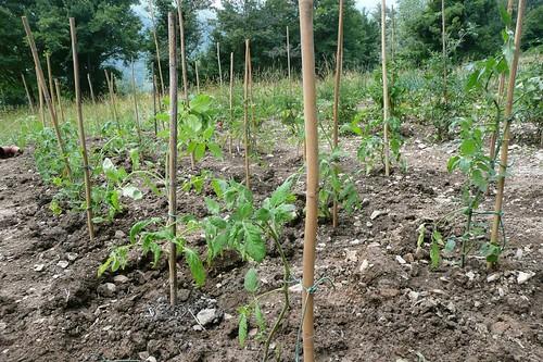 Maggio cosa seminare e piantare nell 39 orto nel giardino for Cosa piantare nell orto adesso