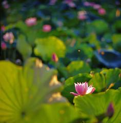 0413-08-20110612台南白河