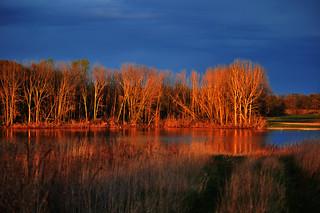 Madison Audubon Society's Erstad Prairie