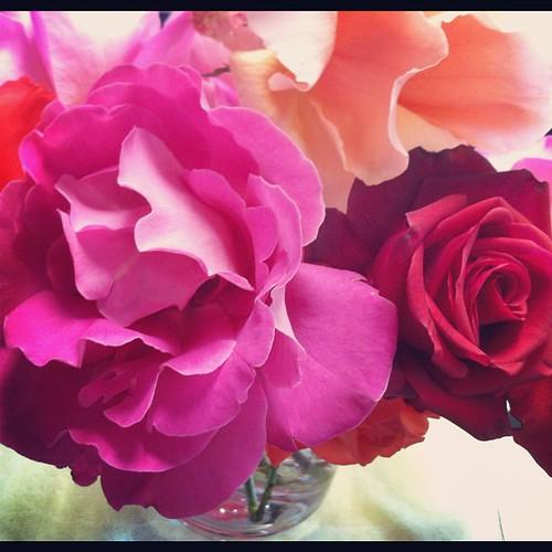 102/366 :: roses