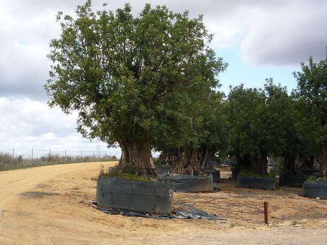 Sevilla Mairena Residencial Aljarosol
