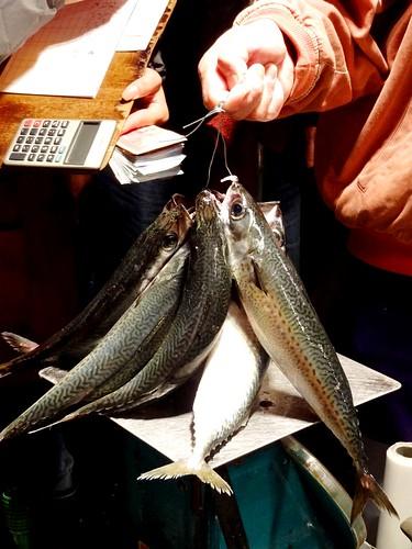 鯖魚是海中表層水域的洄游性魚類,成大群隊活動,有「海洋中的滾筒」、「團結家族」之稱。