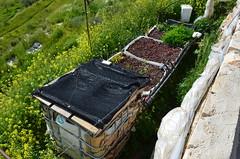建設在農場內的水循環系統,利用植物與石頭過濾水質,並設計景觀 魚池