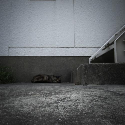 Higashi Kasai Feline