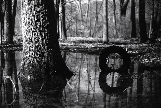 Tree, Tire & Water