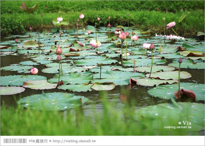 【彰化大村景點】大村雙心池塘/平和夕照平台@浪漫必遊‧約會拍照的好去處~11