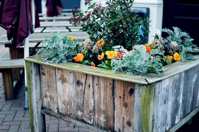 flower box putney