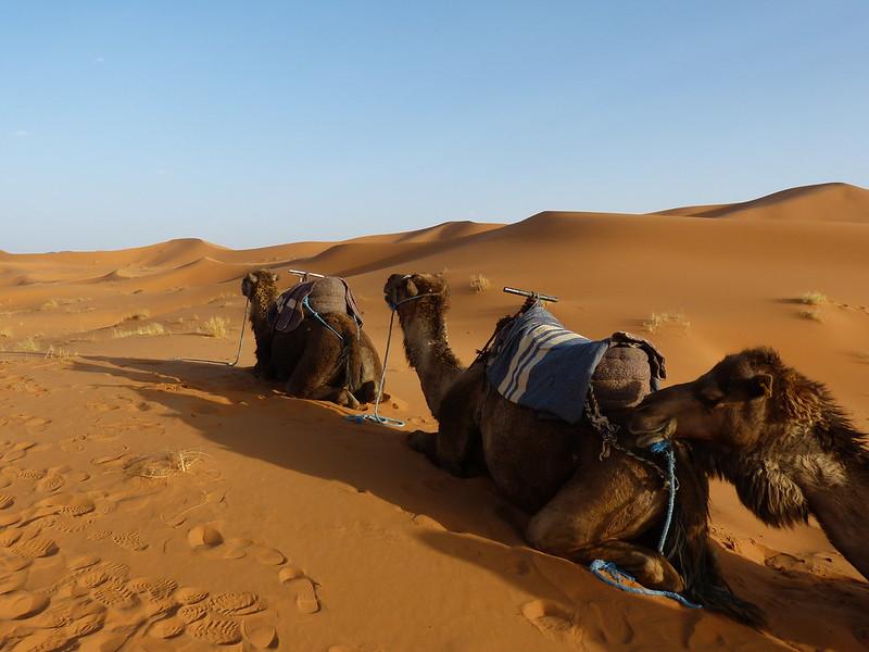 In the desert, Morocco