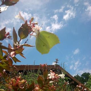 Un #papillon vert qui prend la pose... #vacances #beach