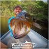 Alexandre Dick com mais um açú fisgado no Rio Negro no municipio de Sta. Isabel do Rio Negro-AM  #pescaamadora #pescaesportiva #pesqueesolte #rionegro #amazonia #fishinglures #fish #fishing #bassmaniacs #bassfishing #monsterfish #rivermonsters #baitcast #