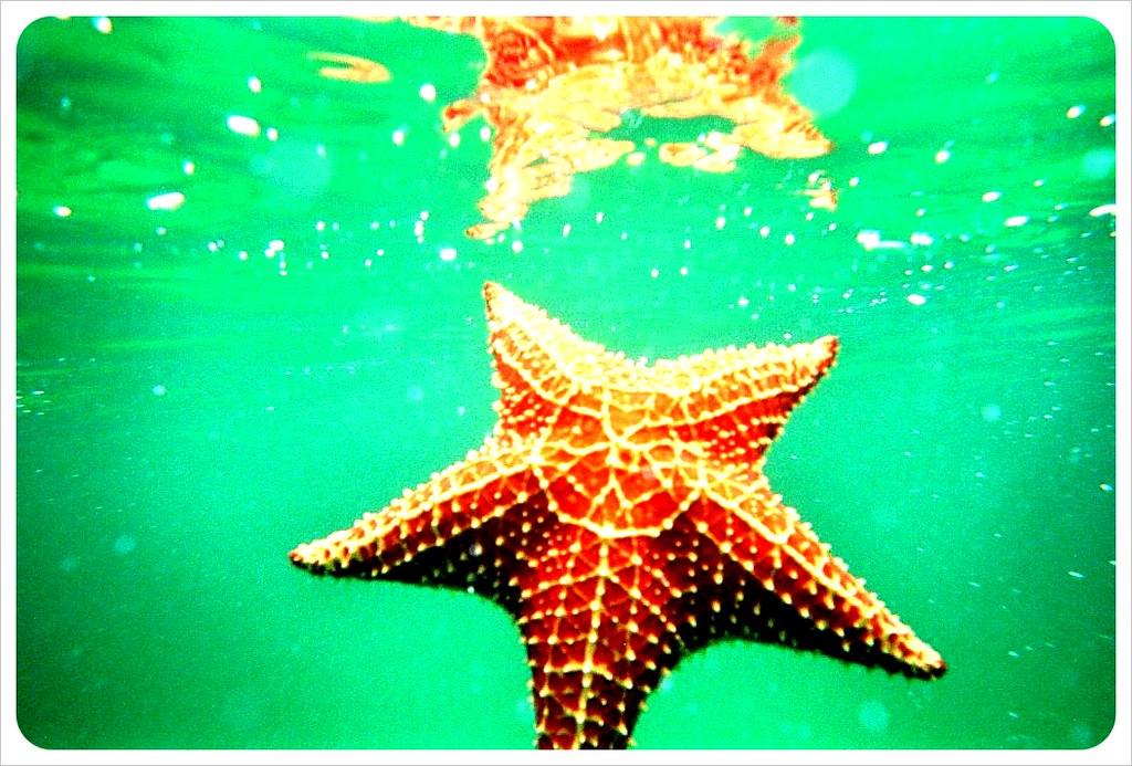 Starfish Panama