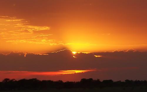 ngc okavangodelta centralkalaharigamereserve southafricansunset kalahariplainscamp botswana2013