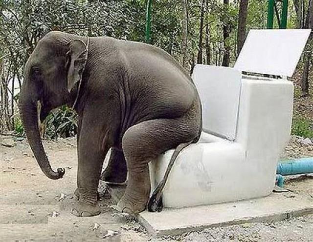 elephant-toilet-diarioecologia