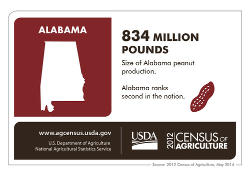 Alabama is more than just cotton these days – chickens and catfish and corn are just a few of the crops grown in the state according to the 2012 Census of Agriculture.