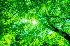 Sunbeams Streaming through Leaves