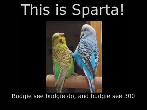 This is Sparta Bugies
