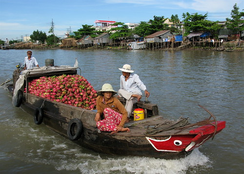 Dragon Fruit Boat, Can Tho