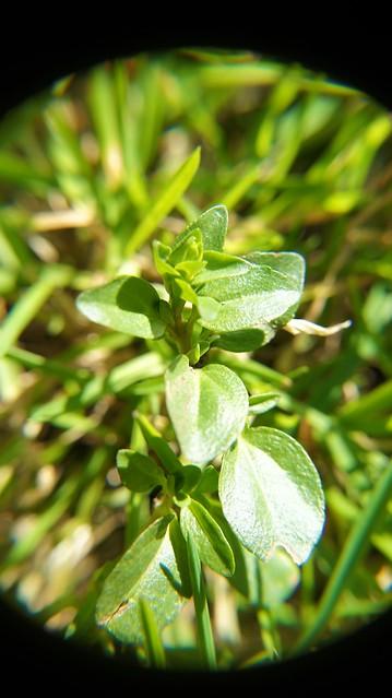anteketborka.blogspot.com, macrojardin5