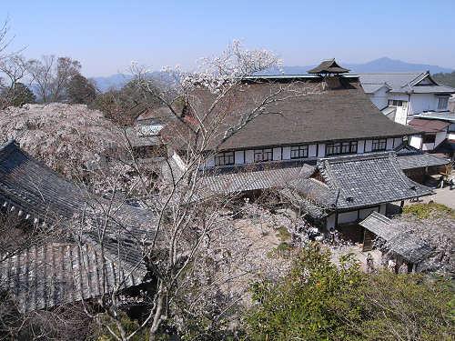吉野の桜2011@吉野山-21