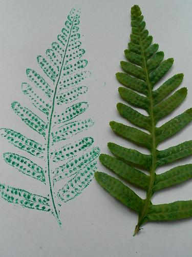 Fern Prints With Ink