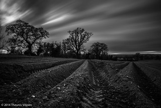 Potato field in Shropshire - IV