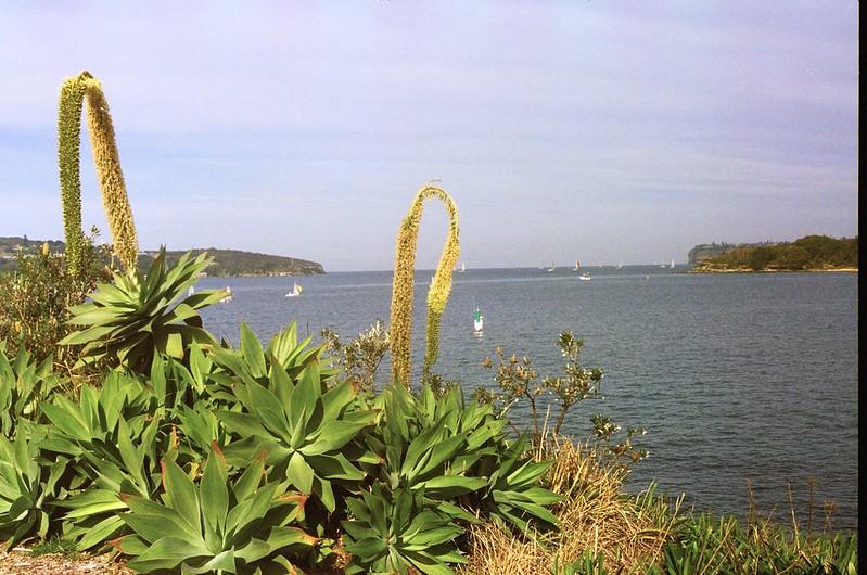 A city bush walk II // Sydney