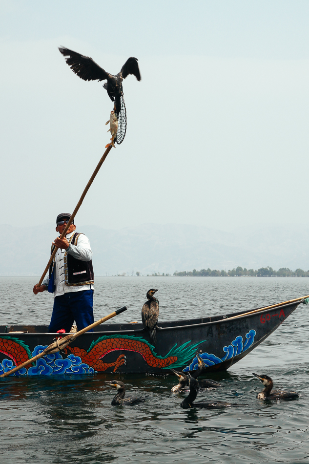 Dali - Cormorant Fishing on Erhai Lake
