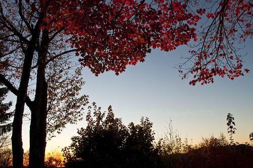 morning fall nature leaves sunrise nc northcarolina blueridgeparkway 2010 nikond5000 dougmallnikond5000 dougmall