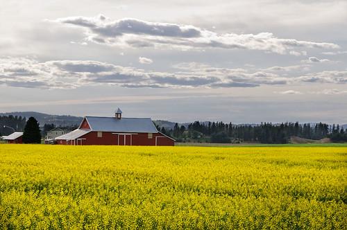 clouds barn photoshop washington nikon spokane nik acr canola d300 easternwashington viveza mikegassphotography