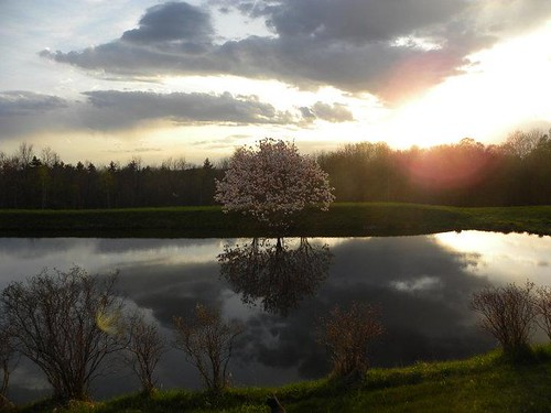 sunset cloud reflection tree water pond blossom