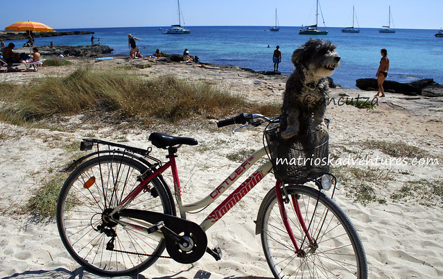 cane nel cestino della bici