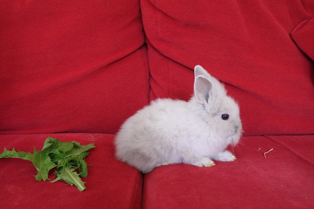 Our new Rabbit!