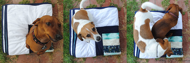 Dogs on Stacked Coins Quilt