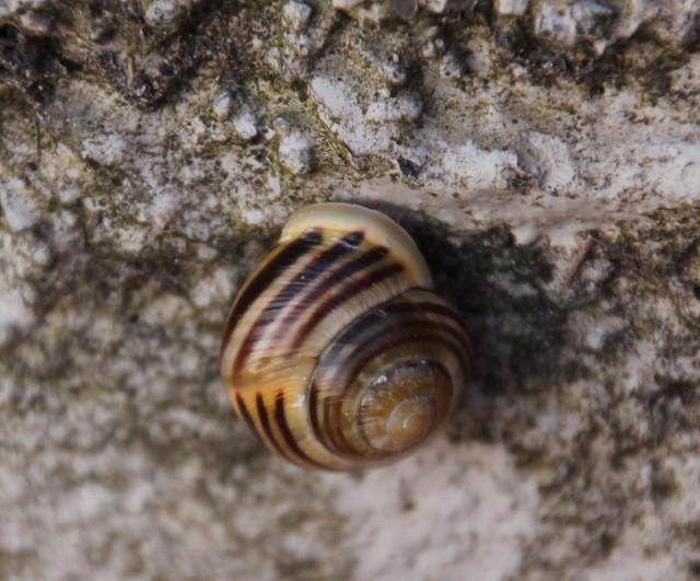 Snail in shell