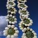 Flores hecho de pétalos del base del Sotol - Flowers made of petals from Sotol trunks; entrada hacia Zapotitlán Palmas, Región Mixteca, Oaxaca, Mexico por Lon&Queta