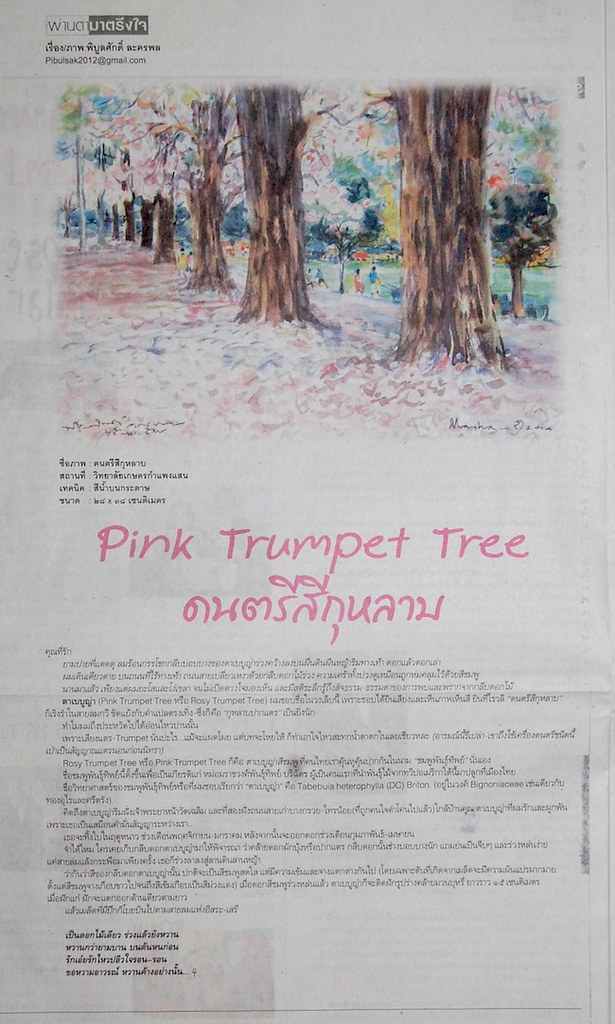 50-Pink Trumpet Tree1
