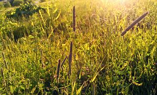 (172/365) Grass rustle