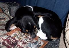 Rosie_62511c