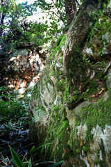 Moss at Hakone - 02