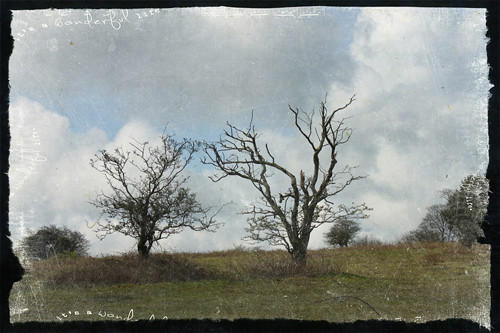 TT-tree-conversation2-w